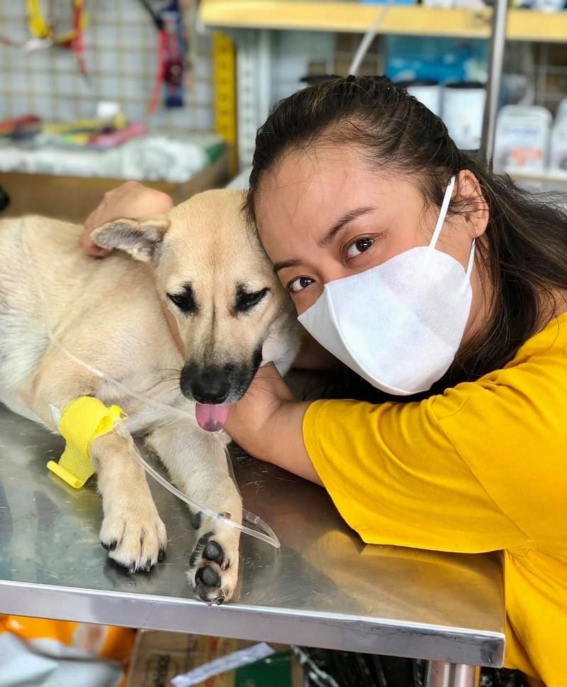 Hồng Ánh nghẹn ngào khi hay tin đàn chó bị tiêu huỷ ở Cà Mau - ảnh 4