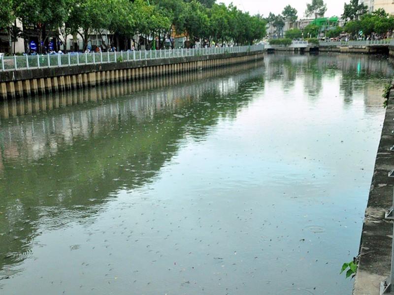 Cá lại nổi đặc kênh Nhiêu Lộc - Thị Nghè - ảnh 4