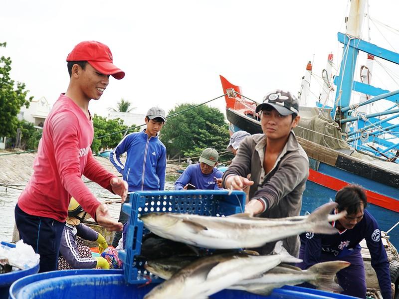 Dân Ninh Thuận chằng chống tài sản chống bão số 12 - ảnh 7