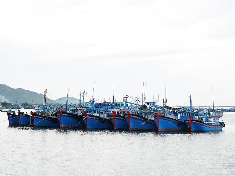 Dân Ninh Thuận chằng chống tài sản chống bão số 12 - ảnh 2