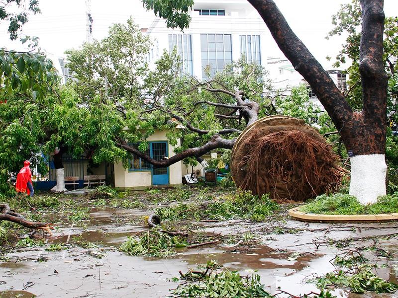 Người dân TP Nha Trang dồn sức khắc phục bão 12 - ảnh 14