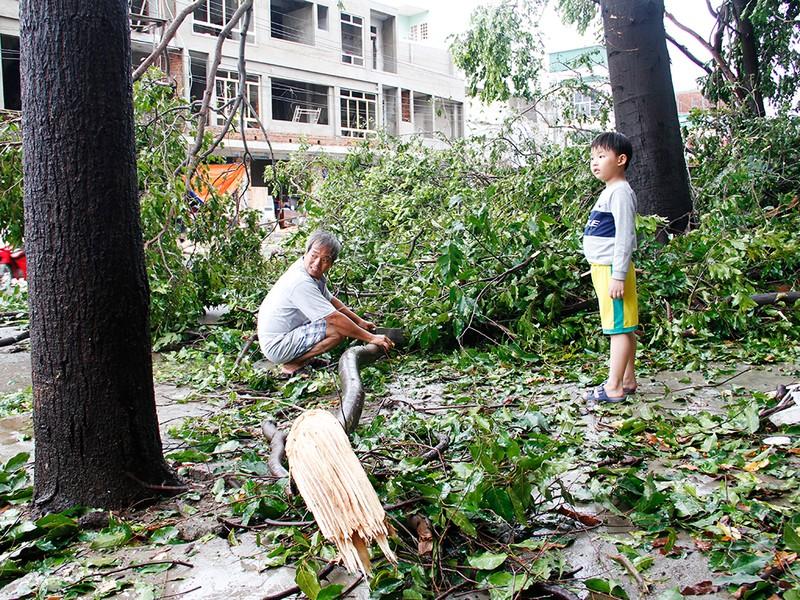 Người dân TP Nha Trang dồn sức khắc phục bão 12 - ảnh 2