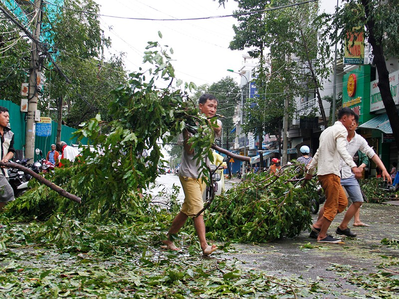 Người dân TP Nha Trang dồn sức khắc phục bão 12 - ảnh 9