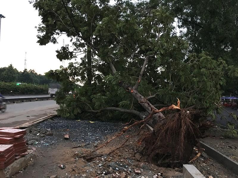 Sập mái nhà, đổ cây, cột điện... sau trận lốc ở Gò Vấp - ảnh 9