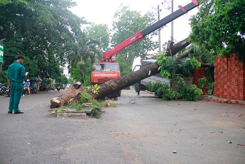 Sập mái nhà, đổ cây, cột điện... sau trận lốc ở Gò Vấp - ảnh 8
