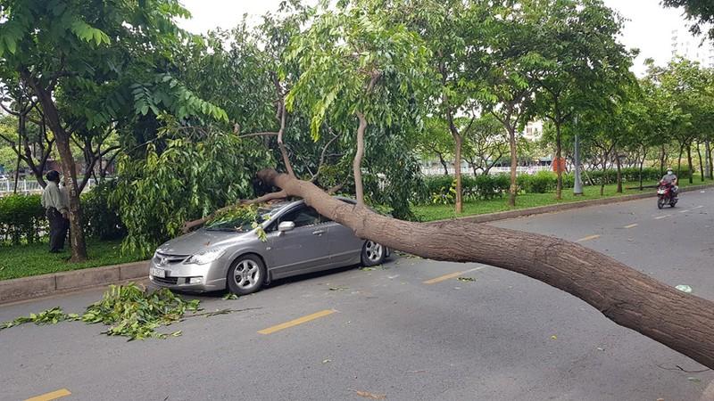 Lốc lớn, cây đổ, tét nhánh, nhà tốc mái hàng loạt ở TP.HCM - ảnh 9