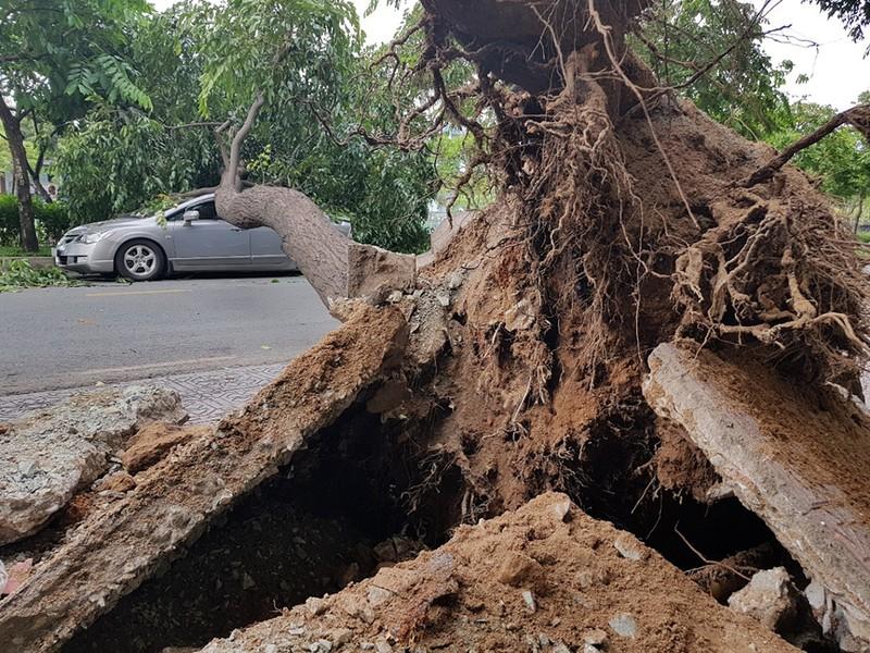 Lốc lớn, cây đổ, tét nhánh, nhà tốc mái hàng loạt ở TP.HCM - ảnh 11