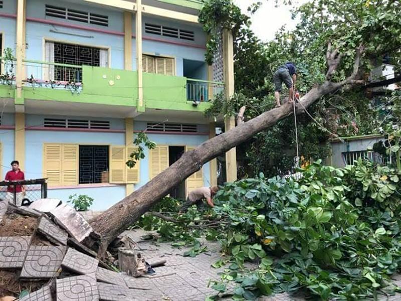 Lốc lớn, cây đổ, tét nhánh, nhà tốc mái hàng loạt ở TP.HCM - ảnh 7