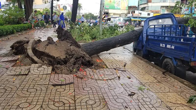 Lốc lớn, cây đổ, tét nhánh, nhà tốc mái hàng loạt ở TP.HCM - ảnh 1
