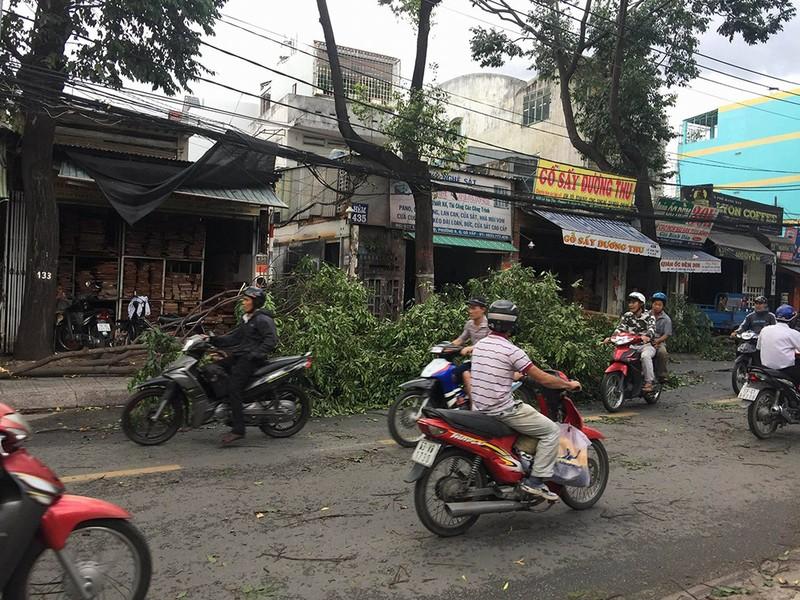 Lốc lớn, cây đổ, tét nhánh, nhà tốc mái hàng loạt ở TP.HCM - ảnh 5