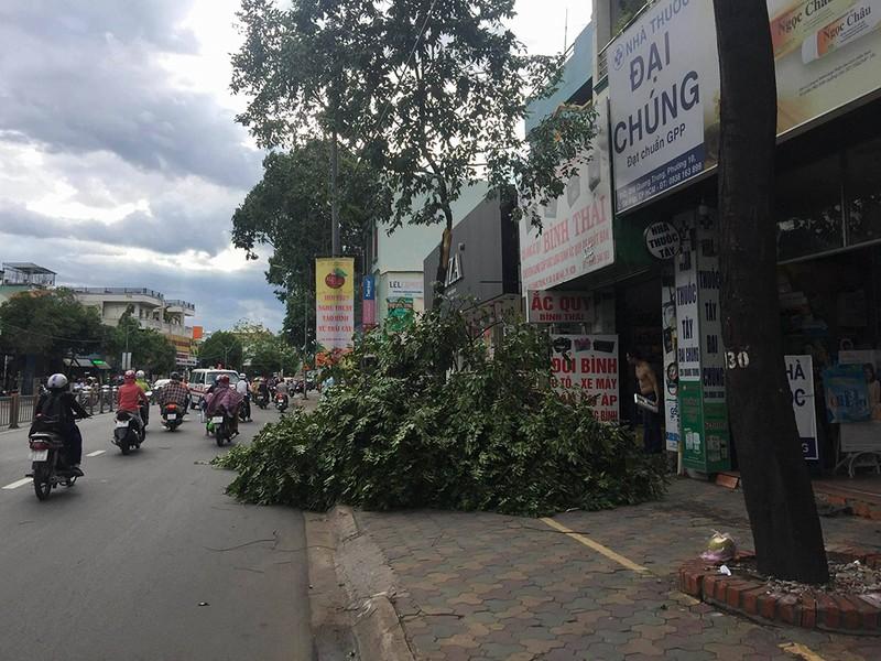 Lốc lớn, cây đổ, tét nhánh, nhà tốc mái hàng loạt ở TP.HCM - ảnh 6