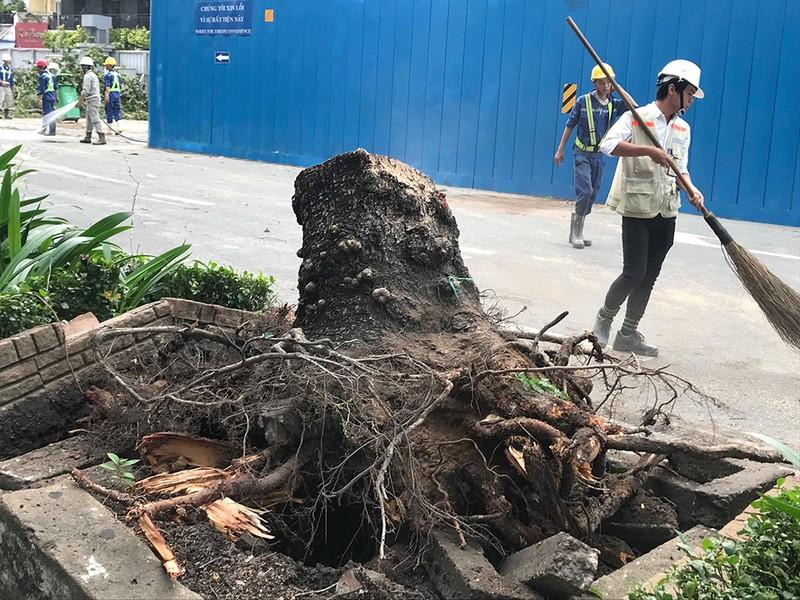 Lốc lớn, cây đổ, tét nhánh, nhà tốc mái hàng loạt ở TP.HCM - ảnh 12