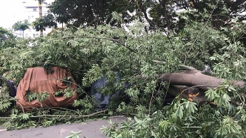 Lốc lớn, cây đổ, tét nhánh, nhà tốc mái hàng loạt ở TP.HCM - ảnh 13