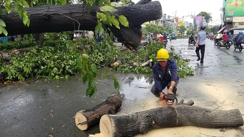 Lốc lớn, cây đổ, tét nhánh, nhà tốc mái hàng loạt ở TP.HCM - ảnh 4