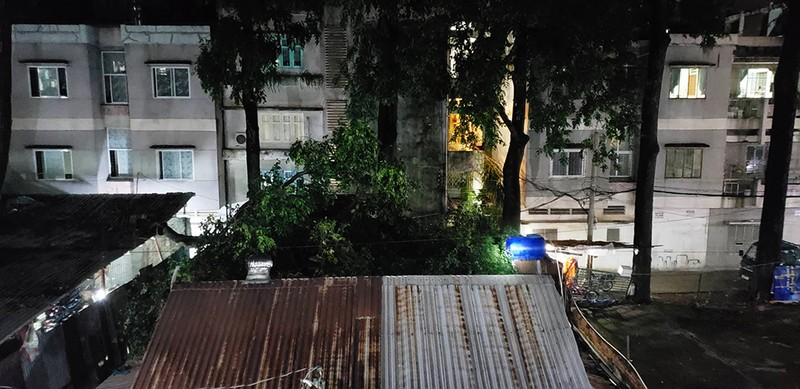 Quận 1: Cây cổ thụ tét nhánh, xuyên thủng nhà dân trong đêm - ảnh 1