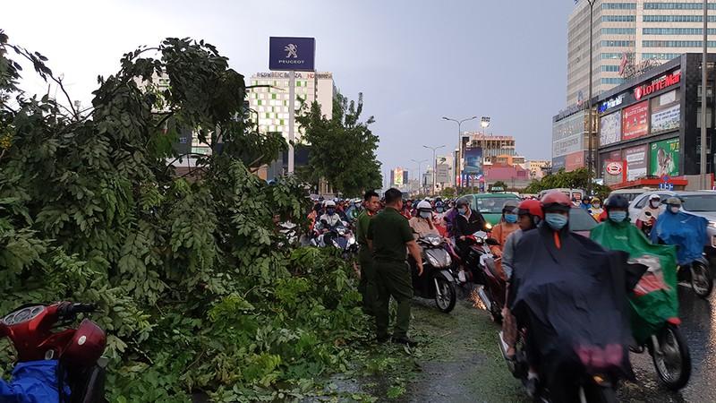 Hàng loạt cây xanh gãy đổ trong mưa lớn, giao thông ùn ứ - ảnh 1