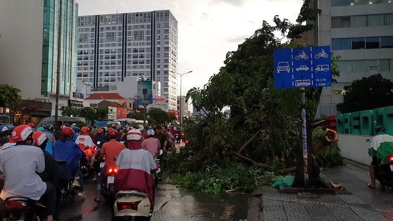 Hàng loạt cây xanh gãy đổ trong mưa lớn, giao thông ùn ứ - ảnh 2