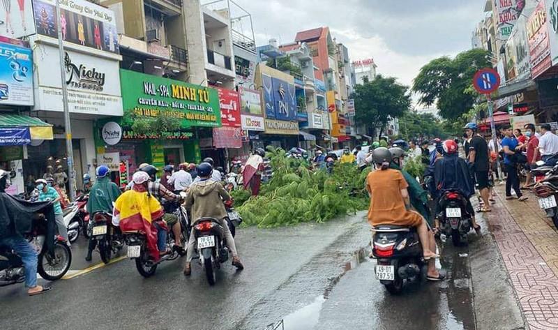 Cây phượng ở Tân Phú bật gốc, đổ ập xuống đường trong mưa - ảnh 1
