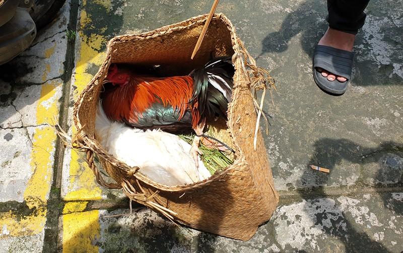 Sới gà 'khủng' ở bãi đất 1 ha ở quận Bình Tân - ảnh 2