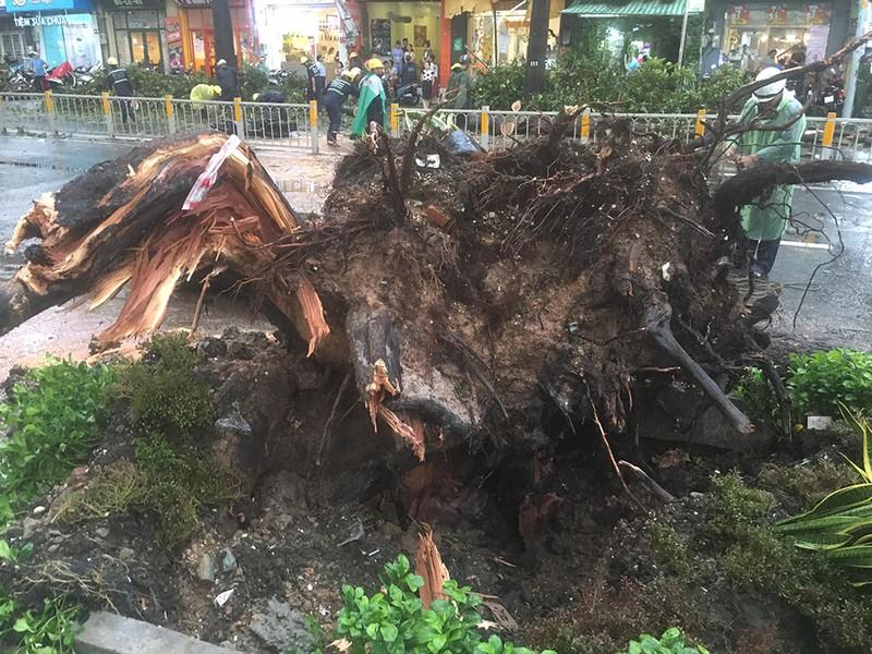 Người bị cây dầu ở đường Nguyễn Tri Phương đè đã tử vong - ảnh 1