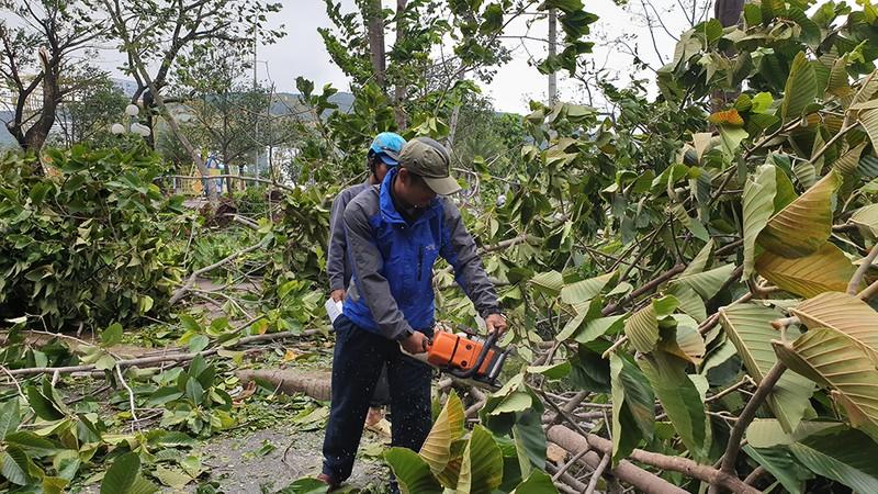 Cảnh tan hoang sau bão số 9 ở TP Quy Nhơn, Bình Định - ảnh 13