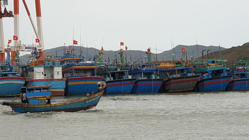 Cảnh tan hoang sau bão số 9 ở TP Quy Nhơn, Bình Định - ảnh 12