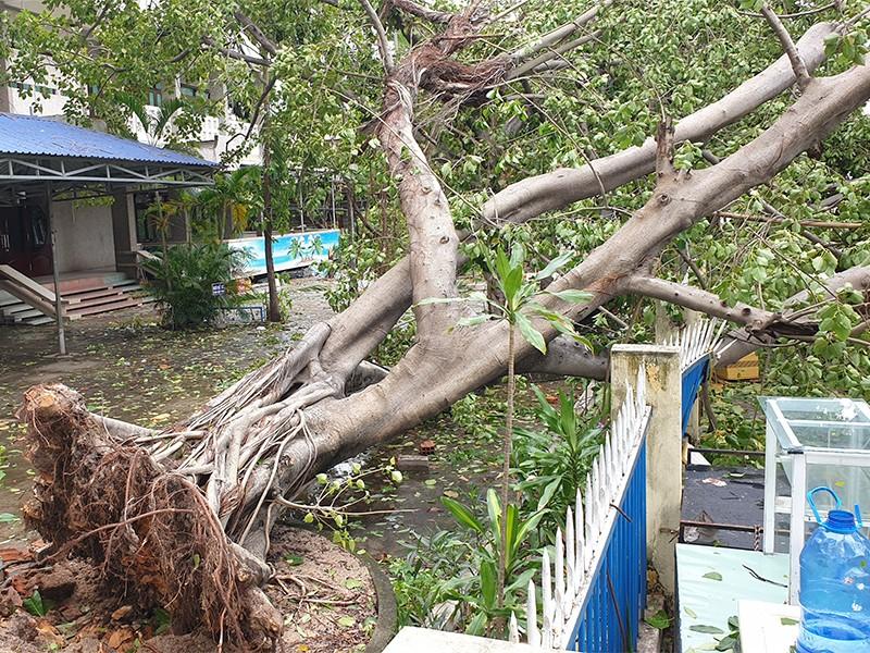 Cảnh tan hoang sau bão số 9 ở TP Quy Nhơn, Bình Định - ảnh 3