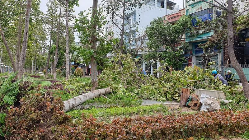 Cảnh tan hoang sau bão số 9 ở TP Quy Nhơn, Bình Định - ảnh 10