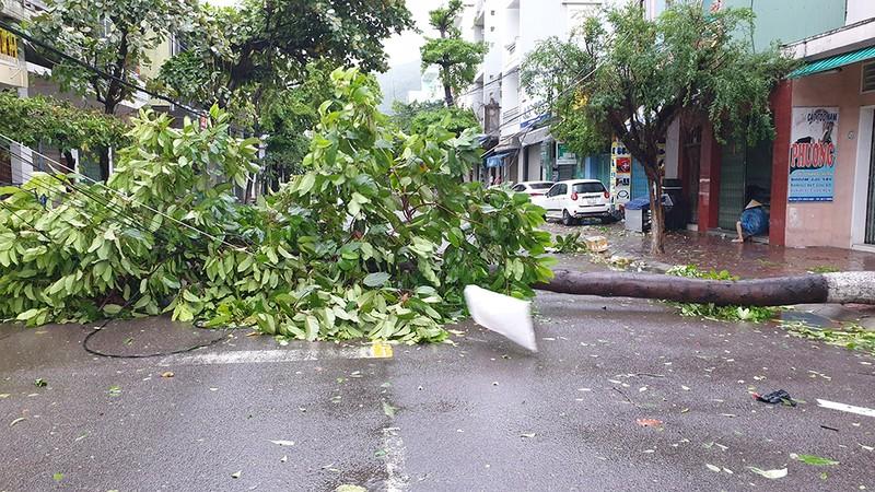 Cảnh tan hoang sau bão số 9 ở TP Quy Nhơn, Bình Định - ảnh 9