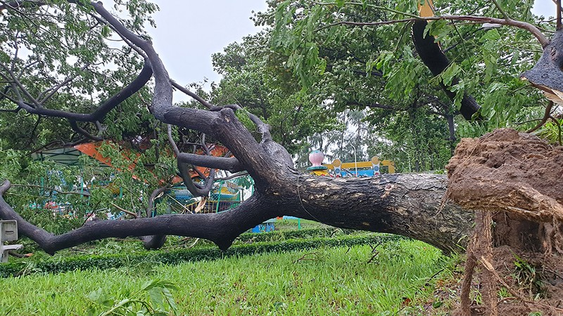 Cảnh tan hoang sau bão số 9 ở TP Quy Nhơn, Bình Định - ảnh 8