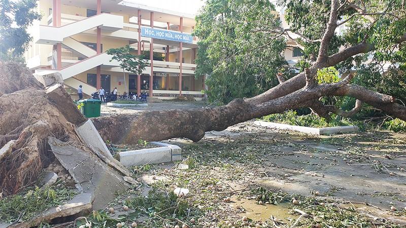 Cận cảnh trường học tan hoang sau bão ở Quảng Ngãi - ảnh 2