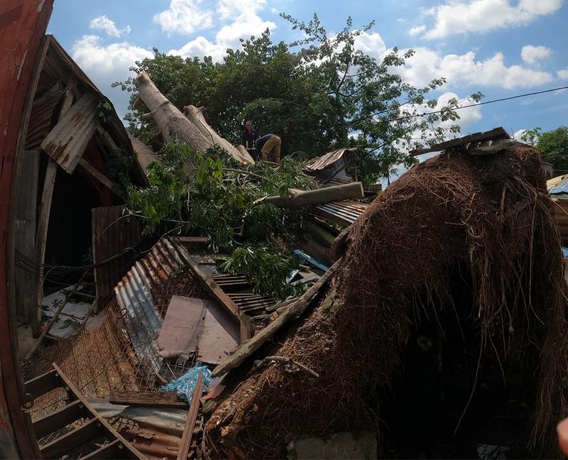 Quận 6: Cây gòn hơn 50 tuổi đổ sập, hai gia đình thoát chết - ảnh 11
