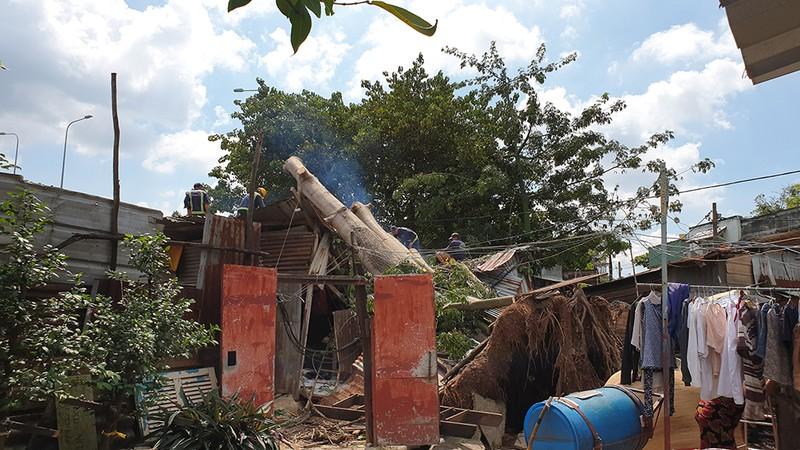 Quận 6: Cây gòn hơn 50 tuổi đổ sập, hai gia đình thoát chết - ảnh 1