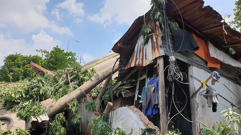 Quận 6: Cây gòn hơn 50 tuổi đổ sập, hai gia đình thoát chết - ảnh 3