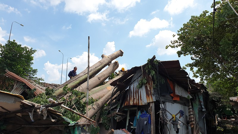 Quận 6: Cây gòn hơn 50 tuổi đổ sập, hai gia đình thoát chết - ảnh 6