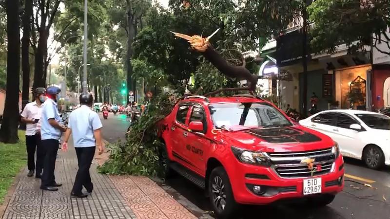 Cây xanh tét nhánh rơi trúng ô tô trong mưa lớn ở quận 1 - ảnh 1