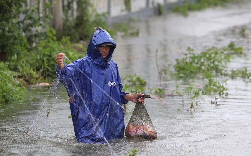Quảng Nam: Người dân đội mưa bắt cá trong lũ - ảnh 4
