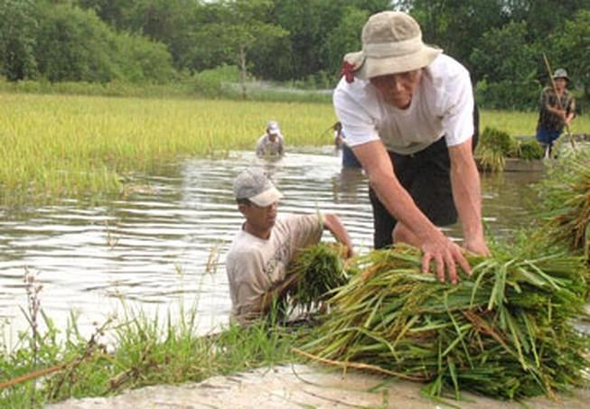 Thủ tướng chỉ đạo ứng phó lũ lụt trên cả nước - ảnh 1