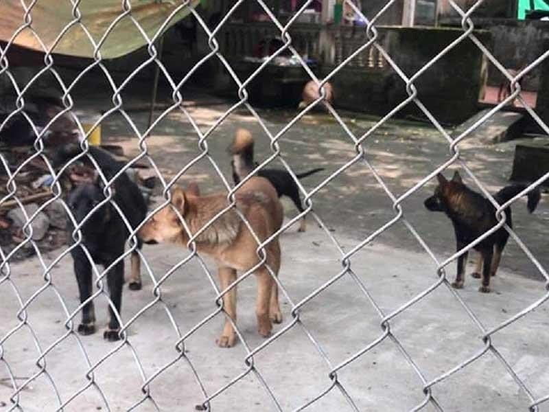 Khó xử hình sự vụ đàn chó cắn chết bé trai 7 tuổi ở Hưng Yên - ảnh 1