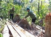 Khởi tố vụ án lâm tặc mở 1 km đường vào rừng đốn gỗ
