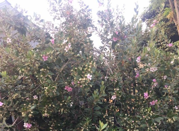 Những hoa thơm, cỏ lạ hút hồn dân phượt khi đến Tây Nguyên - ảnh 4