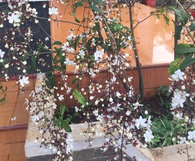 Những hoa thơm, cỏ lạ hút hồn dân phượt khi đến Tây Nguyên - ảnh 6