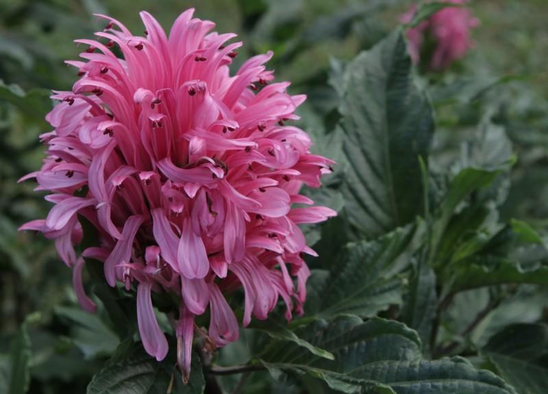 Những hoa thơm, cỏ lạ hút hồn dân phượt khi đến Tây Nguyên - ảnh 3