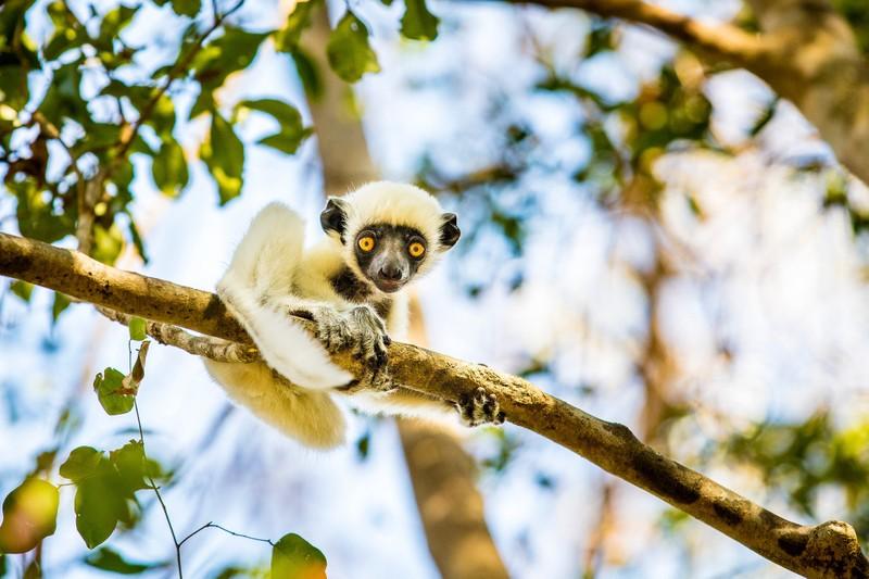 Những cảnh vật thiên nhiên lạ mắt chỉ có ở Madagascar  - ảnh 10