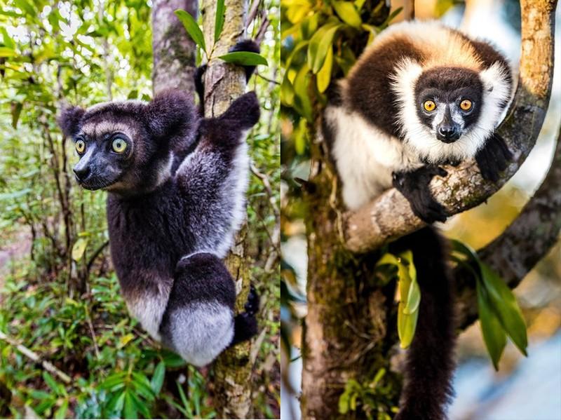 Những cảnh vật thiên nhiên lạ mắt chỉ có ở Madagascar  - ảnh 11