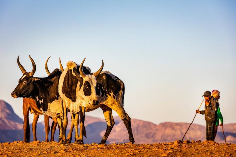 Những cảnh vật thiên nhiên lạ mắt chỉ có ở Madagascar  - ảnh 12