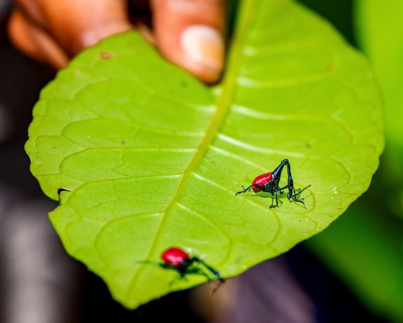 Những cảnh vật thiên nhiên lạ mắt chỉ có ở Madagascar  - ảnh 2