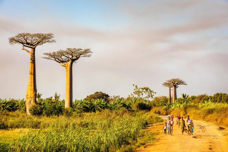Những cảnh vật thiên nhiên lạ mắt chỉ có ở Madagascar  - ảnh 3