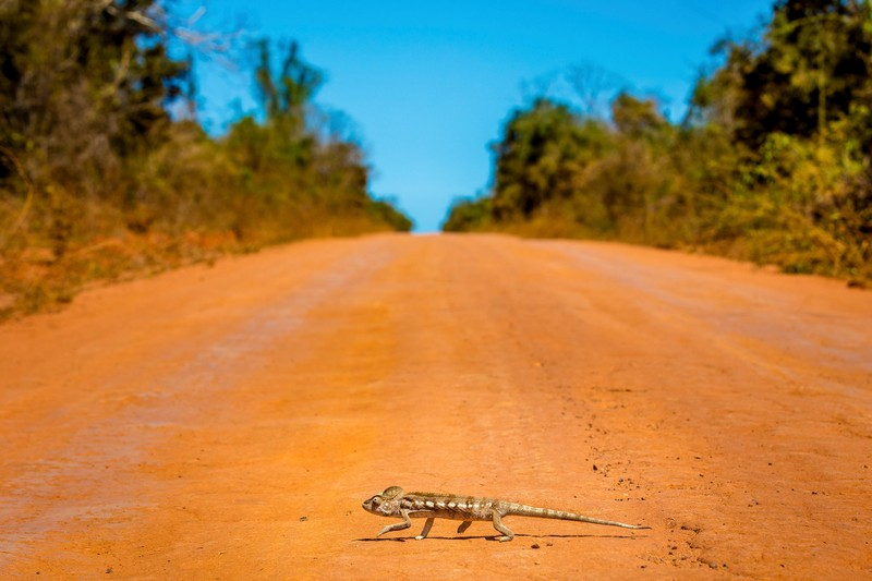 Những cảnh vật thiên nhiên lạ mắt chỉ có ở Madagascar  - ảnh 7