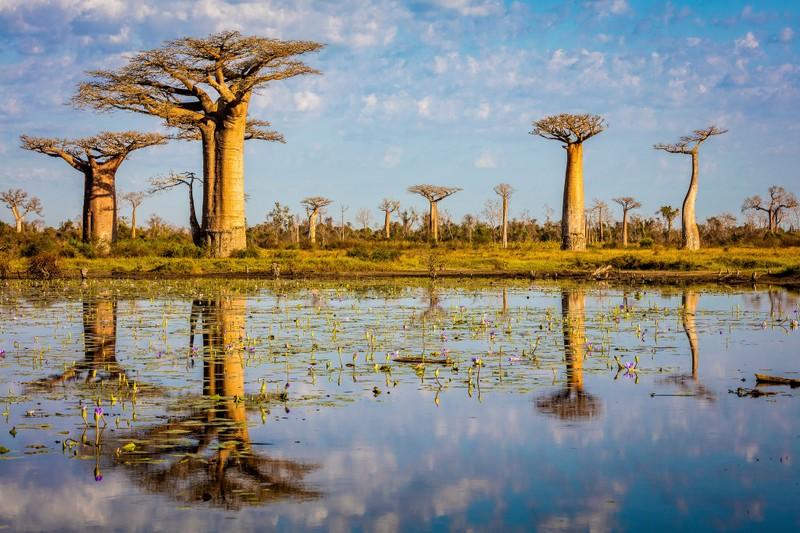 Những cảnh vật thiên nhiên lạ mắt chỉ có ở Madagascar  - ảnh 8